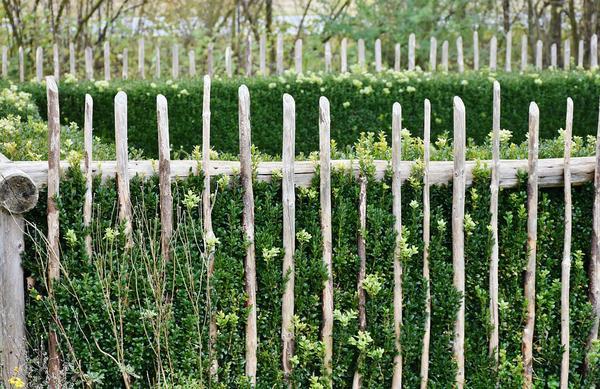 zakładanie ogrodów śląsk